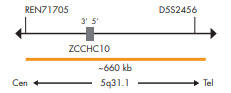 SPEC 5q31.1 プローブのマップ