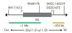 SPEC IGL プローブのマップ