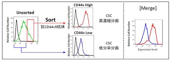 ヒト乳がん細胞株MDA-MB-231