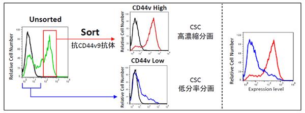 ヒト膵臓がん細胞株AsPC-1