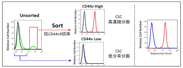 ヒト前立腺がん細胞株PC-3