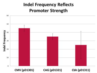インデル頻度はプロモータ強度を反映