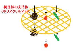 electrophoresis_1.jpg