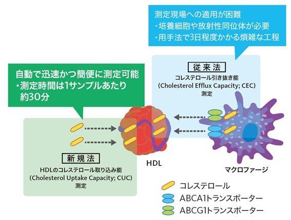 HDL機能測定法概要