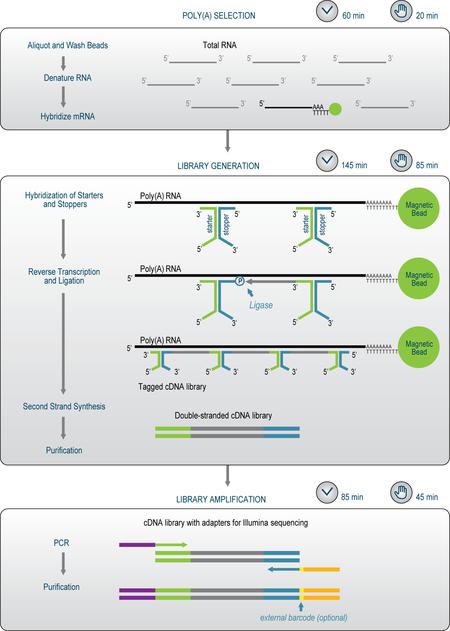 SENSE mRNA-Seq Library Prep Kitのワークフロー