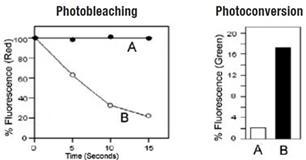 LYSO-ID(R)Red色素(A)、他社のリソソーム染色(B)
