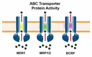 ABC Transporter Protein Activity