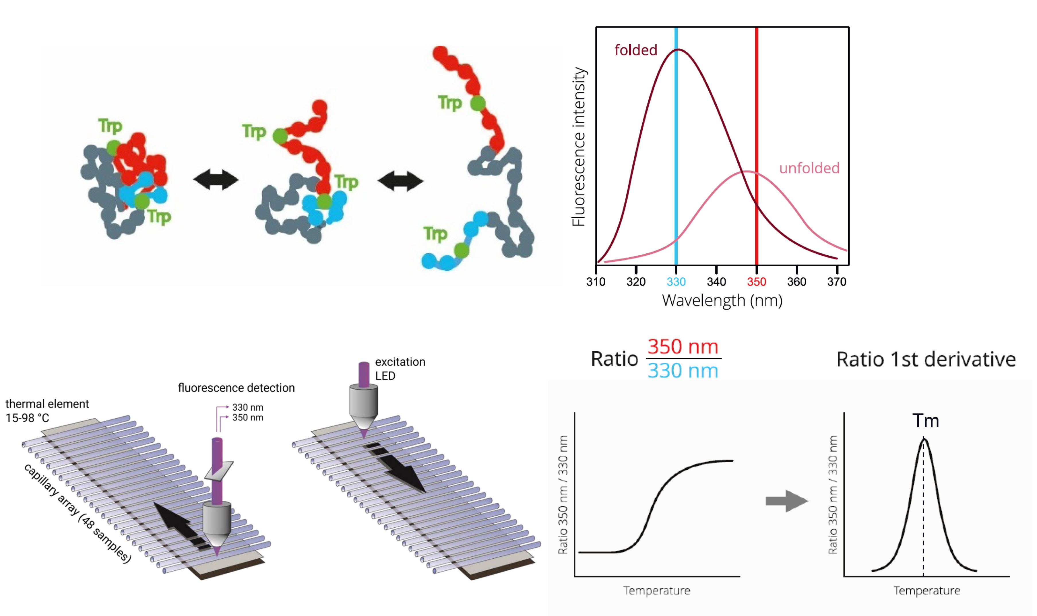 nanoDSFアッセイの原理と測定フロー