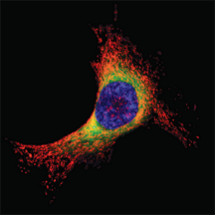 organelles_fluorescence_probe_abd_07.png