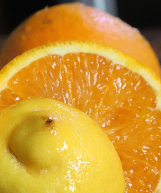 Citrus sp.
