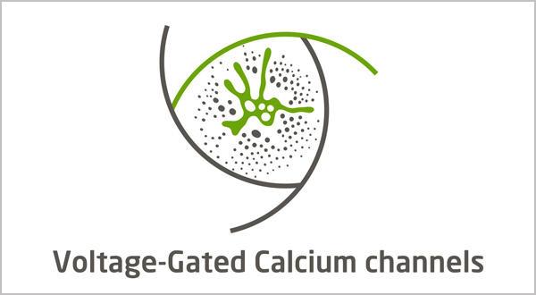 Voltage-gated Potassium Channel Assays