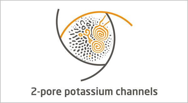 Tandem Pore Domain Potassium Channel
