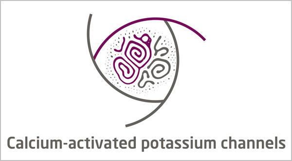 Potassium Channels__Calcium-activated Potassium Channel Assays