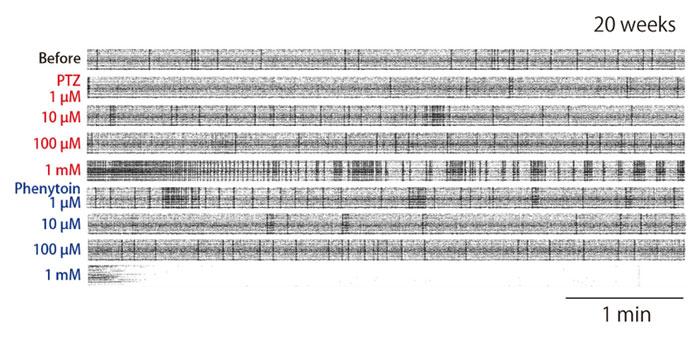 図2 PTZ 投与によるてんかん様異常発火の誘発と抗てんかん薬の作用