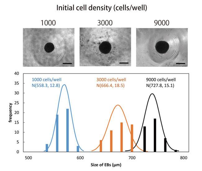 浮遊培養4 日目の胚様体と大きさのヒストグラムおよび正規分布