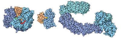 ユビキチン/ユビキチン様タンパク質