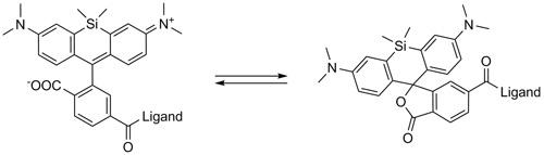 SiR 誘導体は、蛍光性の両性イオン(開環)形と(左)と非蛍光性スピロ(閉環)形(右)との間の平衡状態で存在する。
