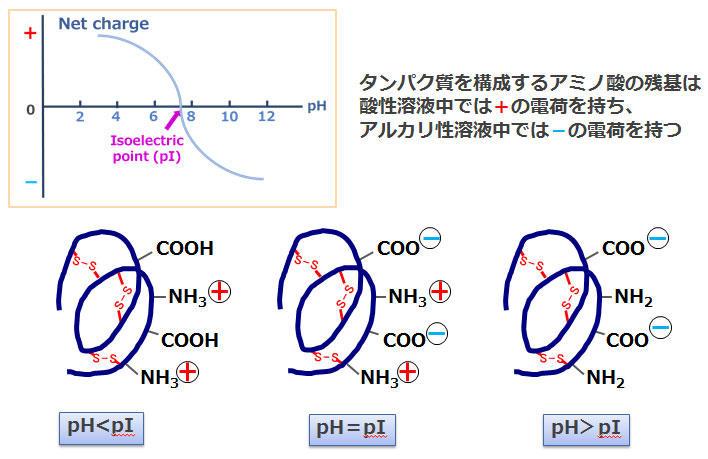 CBJ_electrophoresis_5.jpg