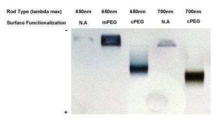 金ナノロッドのアガロースゲル電気泳動解析 アガロースゲル電気泳動解析。粒子の負電荷の増大によって