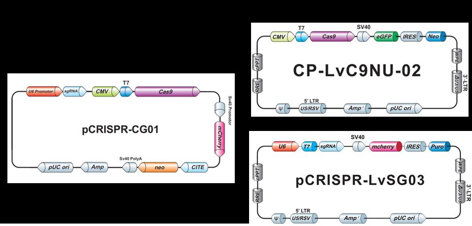 GeneCopoeia(GCP)社ゲノム編集プラスミドの一例