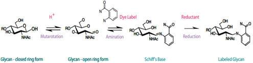 還元的アミノ化反応