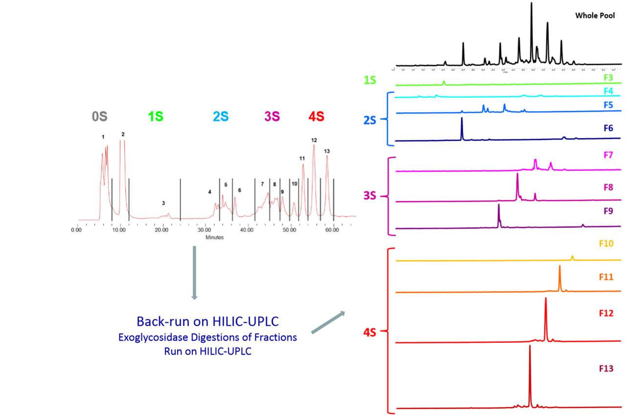 WAX-HPLCで分離後の電荷の異なるフラクションを用いて、HILIC-(U)HPLCで解析を行う