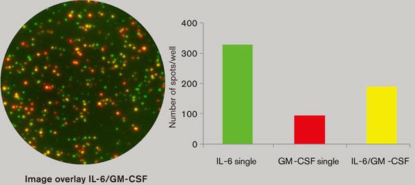 ヒト単球の分泌サイトカインのFluoroSpot分析