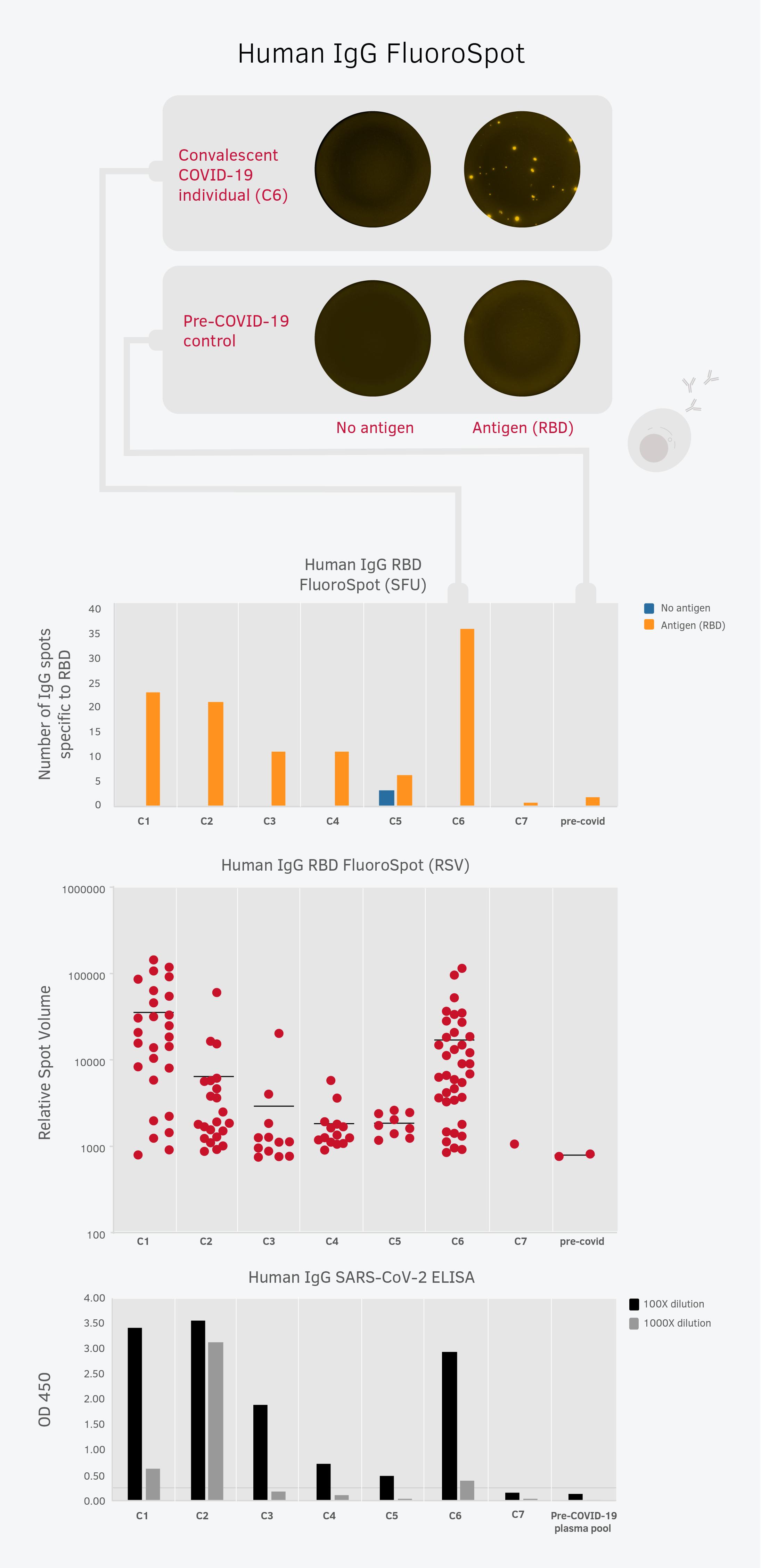 RBD特異的なB細胞の数と抗体力価との相関性