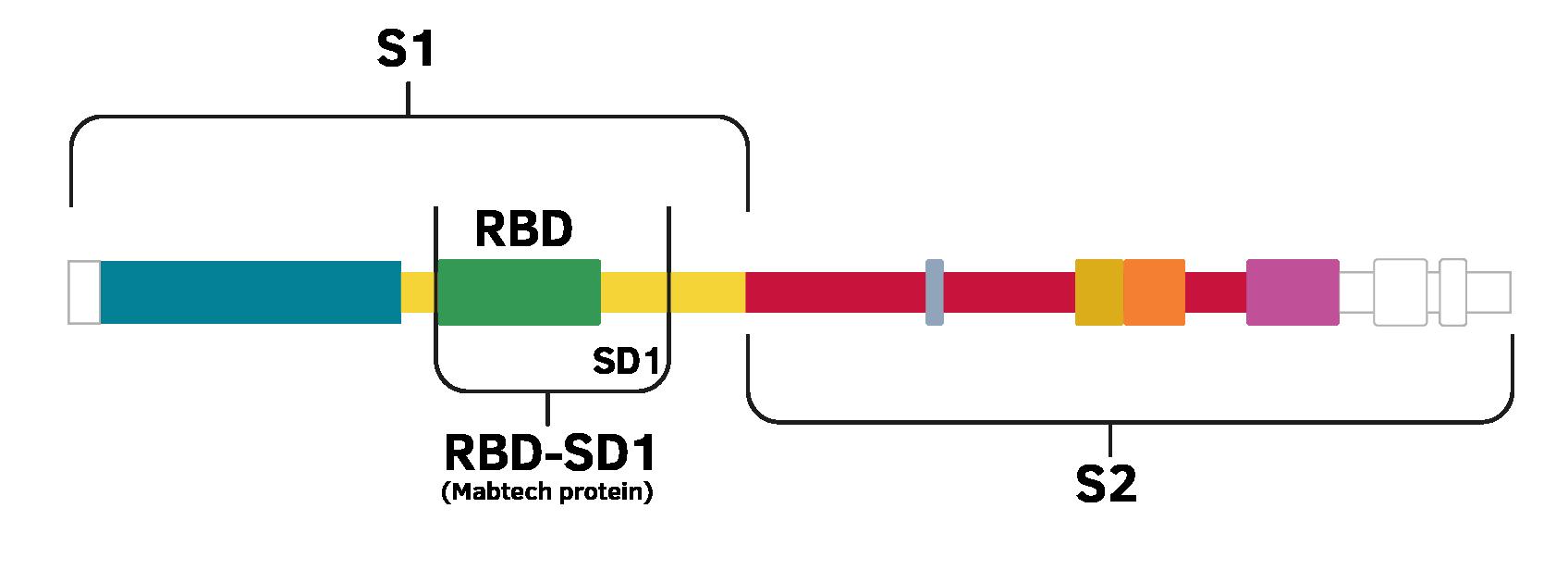 RDB抗原の検出