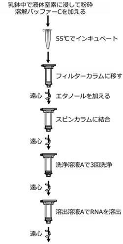 NOG_PlantFungi_1.jpg