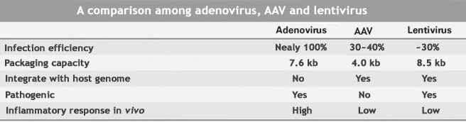A comparison among adenovirus, AAV and lentivirus