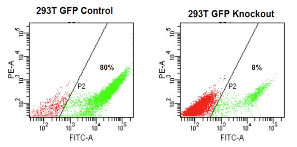 GFP発現量変化のFACS分析
