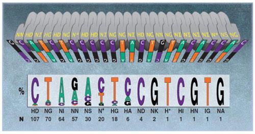 TALEN用DNA結合コード。Bogdanove & Voytas (2011)より引用