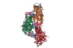 F-アクチンとファロイジンの結合