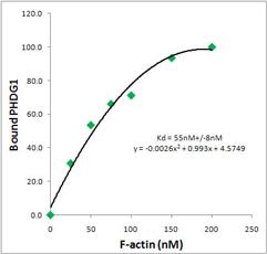 cyt-phalloidin-1-3.jpg