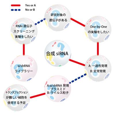 RNAi 効果を誘導するsiRNA形態の決定