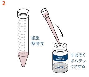 2. 細胞懸濁液100 µlを加えてすばやくボルテックスをかけてよく混合します。